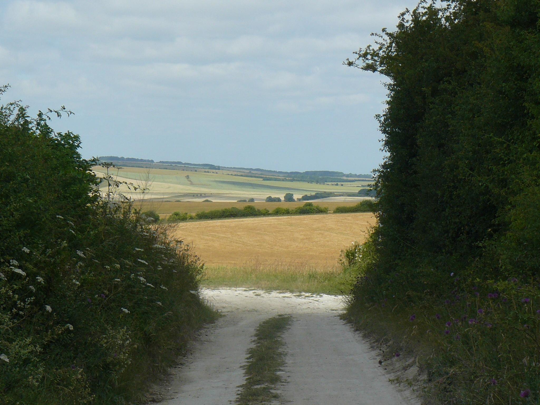 ridgeway 018